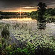 Swamp Sunrise Poster
