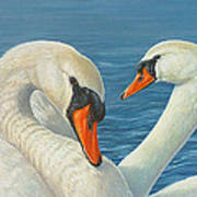 Swans In Love Poster