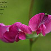 Sweet Pea Flower Poster
