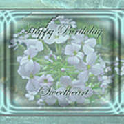 Sweetheart Birthday Greeting Card - Wild Phlox Poster