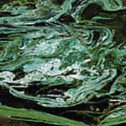 Swirling Algae Poster