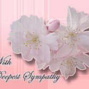 Sympathy - Cherry Blossoms Poster