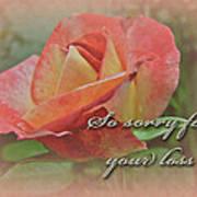 Sympathy Greeting Card - Peach Rose Poster
