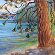 Tahoe Light Sugar Pine Point State Park Poster