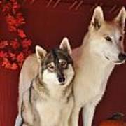 Takoda And Alaska In The Fall Poster