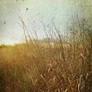 Tall Grass Growing In Late Autumn Poster by Sandra Cunningham