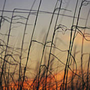 Tall Grasses Blowing In The Wind Poster