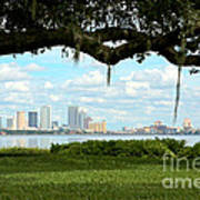 Tampa Skyline Through Old Oak Poster