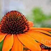 Tangerine Summer Poster