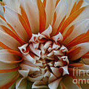 Tangerine Tinged Poster