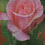 Tea Rose - Asia Series Poster