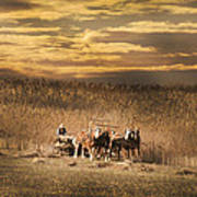 Team Of Four Horses Poster