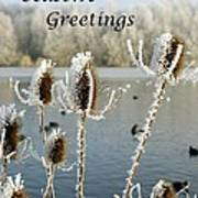 Teasel With Frost Poster