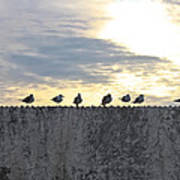 Ten Seagulls Stand On Top Of Stucco Wall Poster