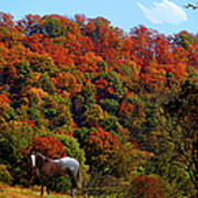 Tennessee Fall Poster