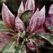 Textured Blooms 1 Poster