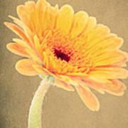 Textured Gerbra Poster
