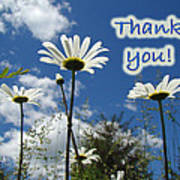 Thank You Greeting Card - Oxeye Daisy Wildflowers Poster