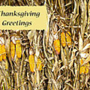Thanksgiving Greeting Card - Dried Corn Stalks Poster