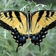 The Beauty Of A Butterfly Poster