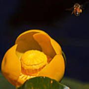The Bee Poster