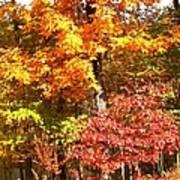 The Blaze Of Autumn Poster