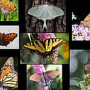 The Butterfly Collection Poster