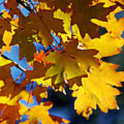 The Colors Of Autumn In Arizona  Poster