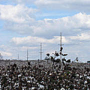 The Cotton Crops Of Limestone County Alabama Poster