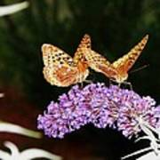 The Dancing Butterflies Poster