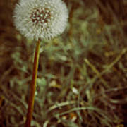 The Dandelion Poster