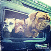 The Dog Taxi Is A Hummer Poster by Nina Prommer