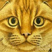 The French Orange Cat Poster