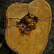 The Heart Of A Tree Poster