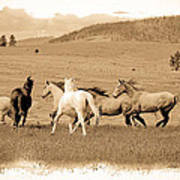 The Horse Herd Poster