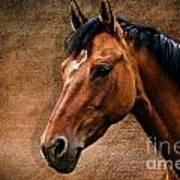 The Horse Portrait Poster