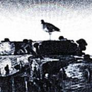 The Jetty Bird Poster