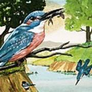 The Kingfisher Poster