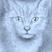 The Kitten Poster by Jack Skinner