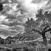 The Light On The Cottonwood Bw Poster