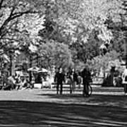 The Mall At Central Park In Black And White Poster