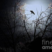 The Night The Raven Appeared In My Dream . 7d12631 Poster