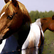 The Prairie Horses Poster