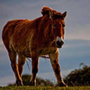 The Przewalski Horse Equus Przewalskii Poster