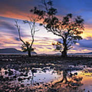 The Reflex Of Tree In Sunset Poster by Arthit Somsakul
