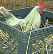 The Rooster That Laid A Golden Egg Poster