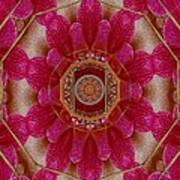 The Sacred Orchid Mandala Poster