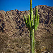 The Saguaro Poster by Robert Bales