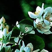 The Soft White Blossom  Poster