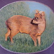 The Southern Pudu Poster